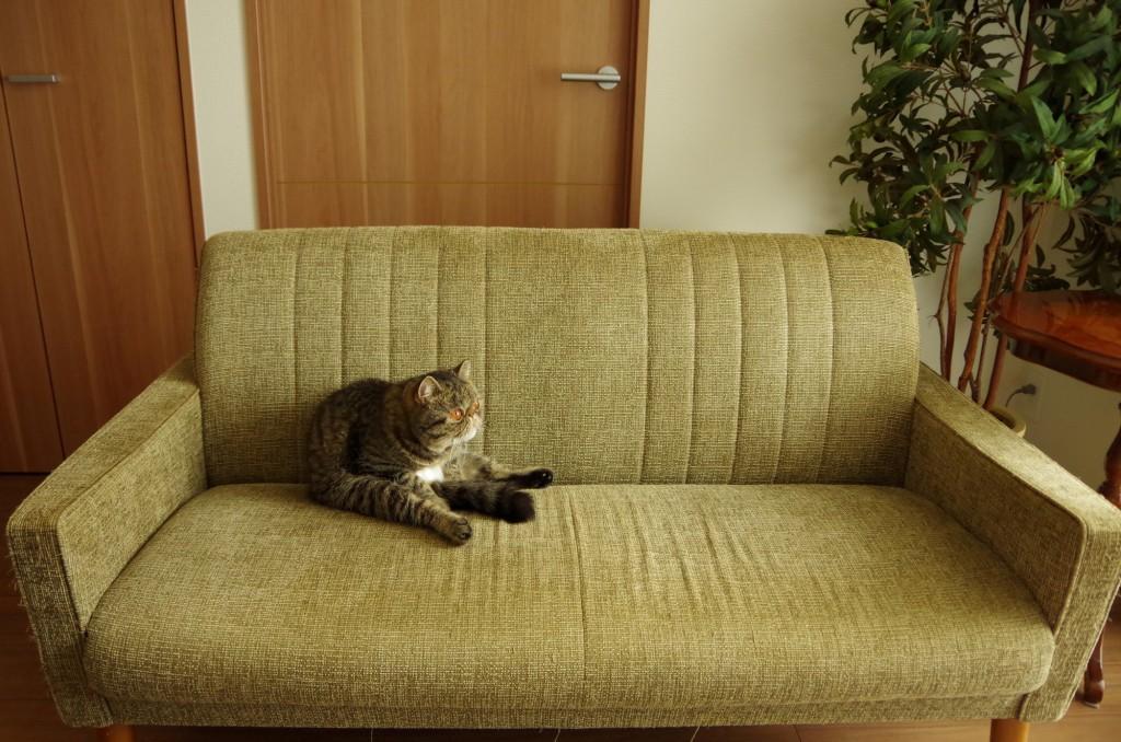 ペットと家具の付き合い方
